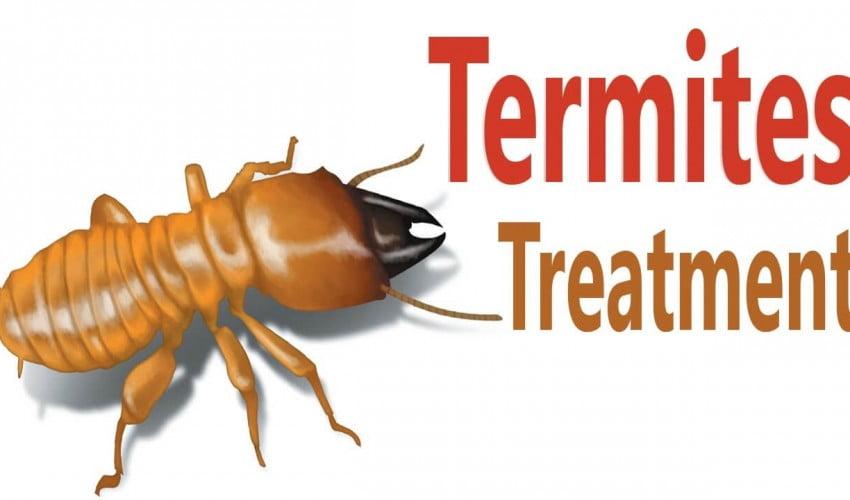 termite pest control melbourne