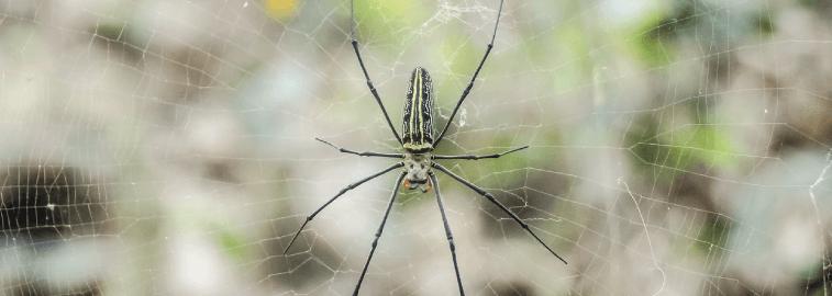 spider pest control melbourne