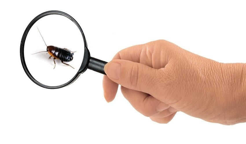 Pest Inspection In Melbourne
